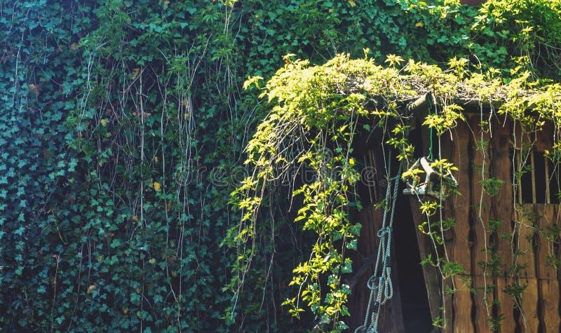 Casa na árvore de madeira coberto de vegetação com a hera fotografia de stock