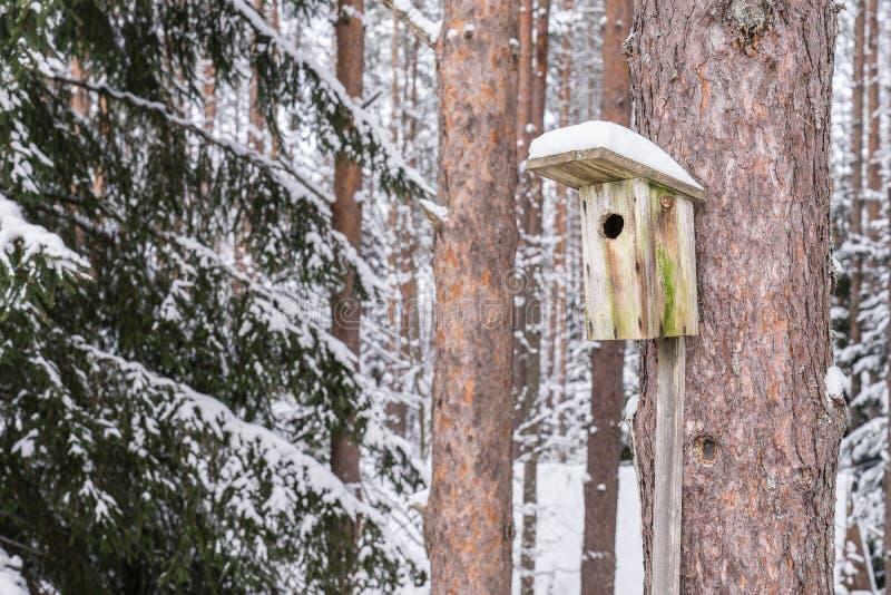 Casa nevado do pássaro em um pinheiro Aviário de madeira da madeira Caixa-ninha na floresta, foto de stock