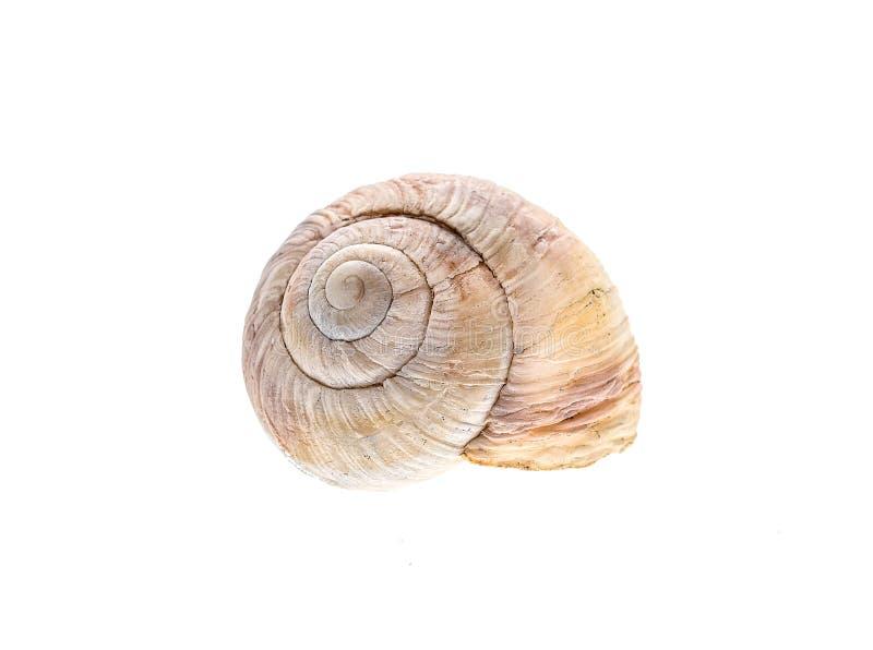 Casa ou shell espiral do caracol isolada no fundo branco imagens de stock