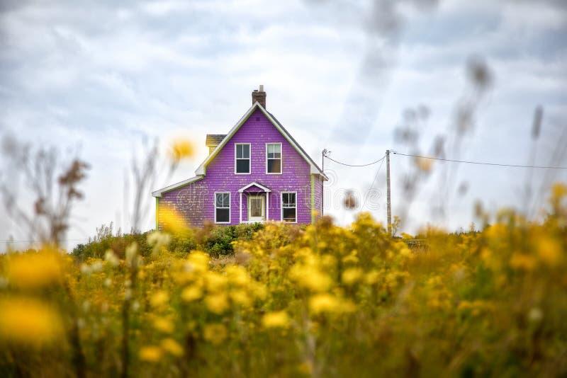 Casa púrpura y flores amarillas foto de archivo