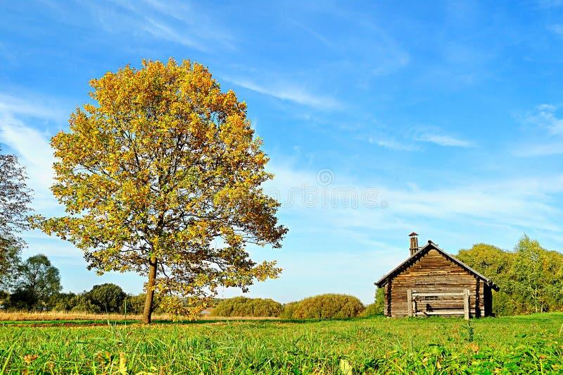 Casa pequena e carvalho no campo imagem de stock royalty free