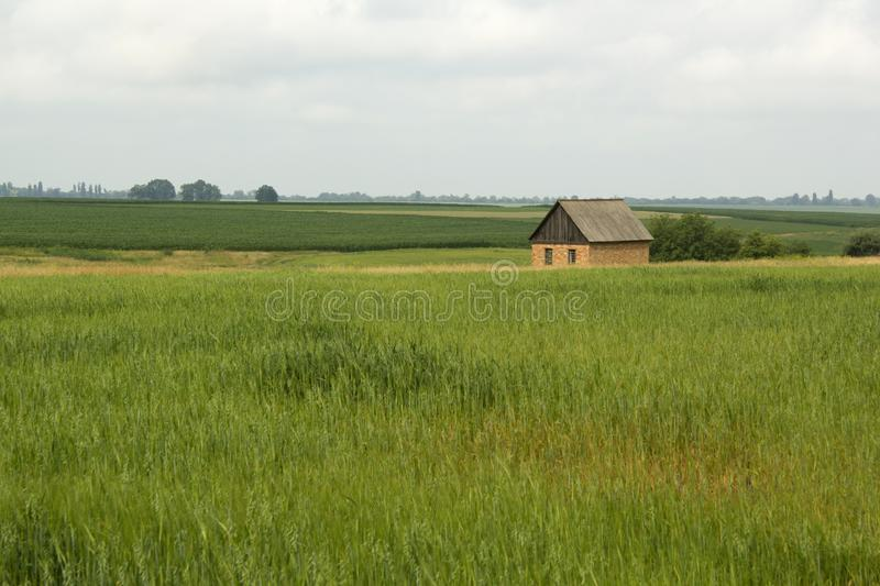 Casa pequena só no campo verde fotografia de stock royalty free