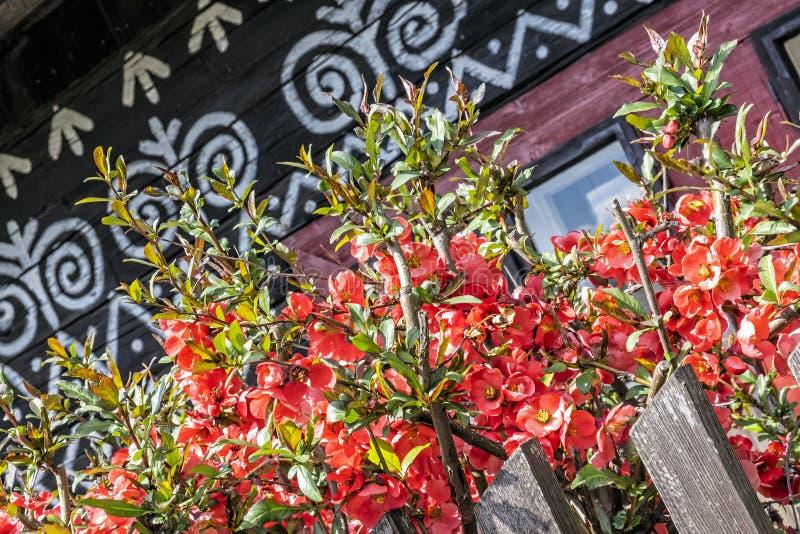 Casa popular pintada, Cicmany, Eslováquia imagem de stock royalty free