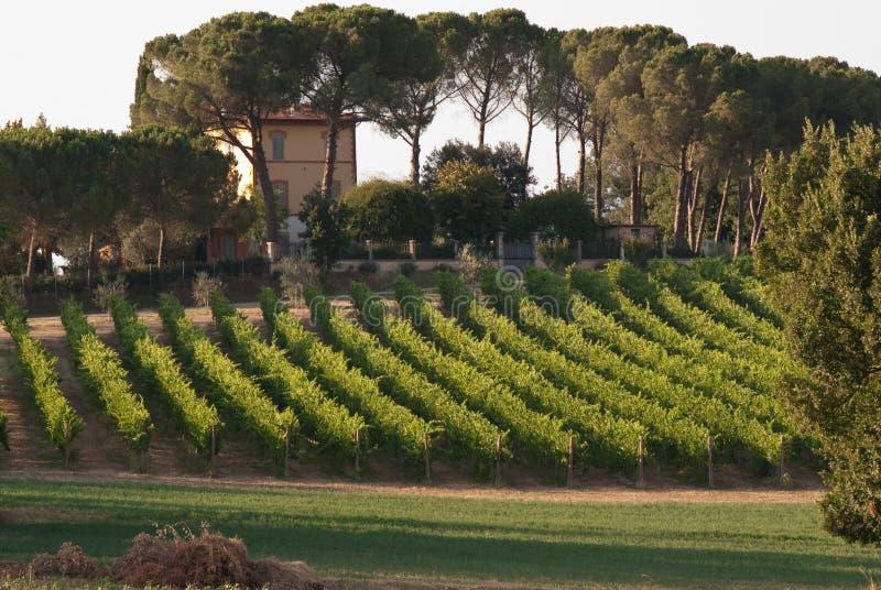 Casa senhorial e vinhedo italianos fotografia de stock royalty free