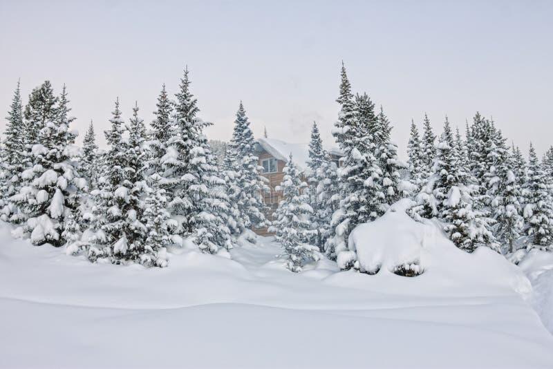 Casa sob a neve no chalé de madeira do inverno entre árvores spruce no foto de stock royalty free