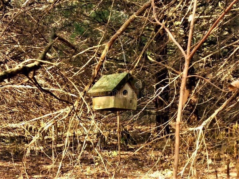 Casa sozinha do pássaro do suporte fotografia de stock