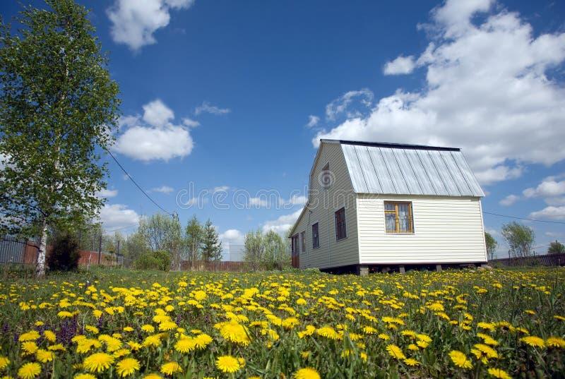 Casa suburbana, coberta com o tapume no gramado com dentes-de-leão amarelos imagem de stock royalty free