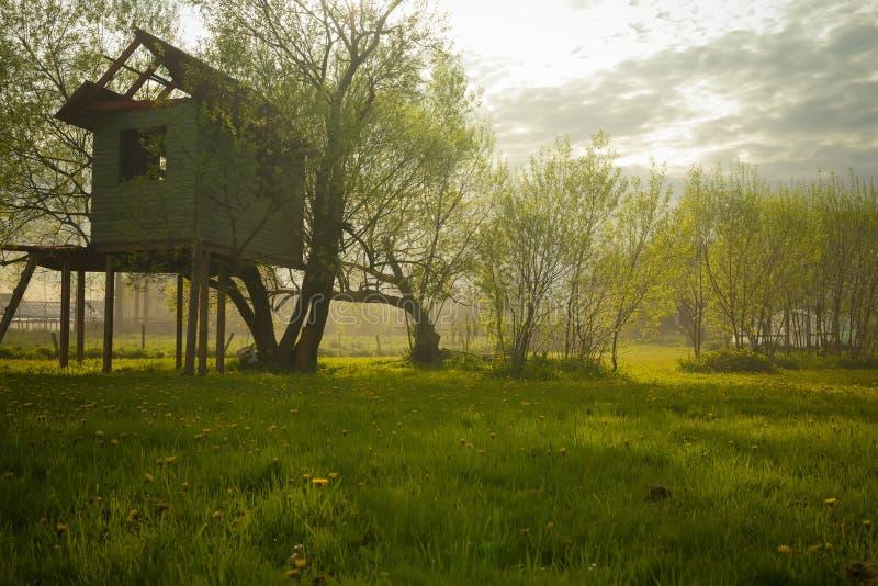Casa sull'albero fotografie stock libere da diritti