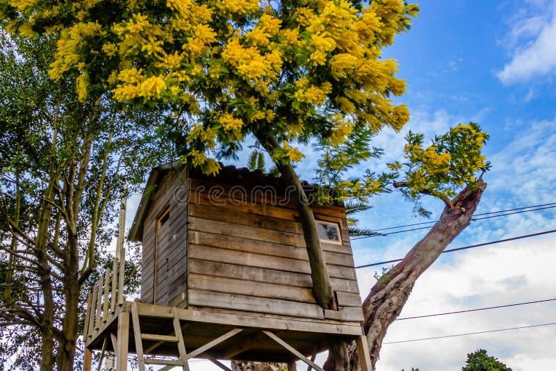 Casa sull albero bambini download casa sullalbero per i bambini nel giardino immagine stock - Costruire una casa sull albero per bambini ...