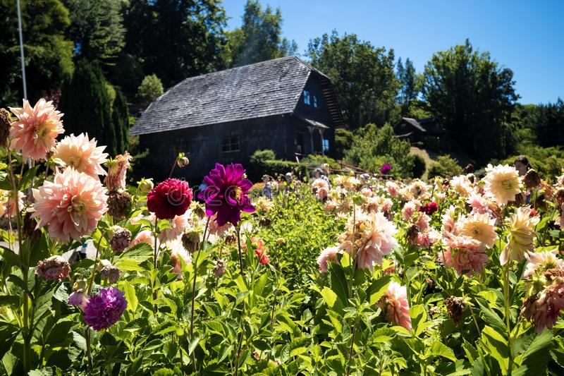 Casa tedesca con i fiori in Frutillar nel Cile fotografie stock