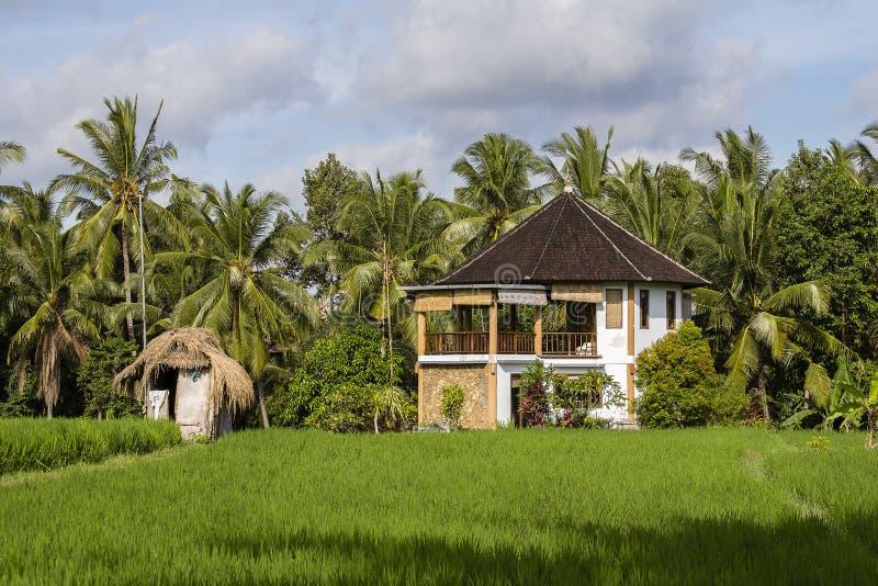 A casa tropical com um telhado telhado entre o arroz coloca Ilha Bali, Indonésia imagens de stock