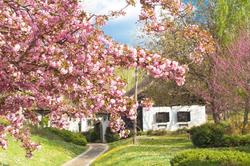 Casa velha agradável com flores foto de stock