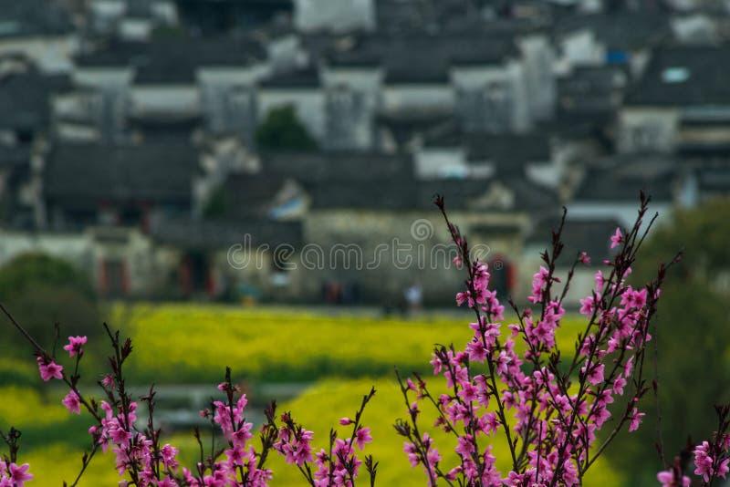 Casa velha chinesa antiga da vila com as flores cor-de-rosa na montanha, anhui, huizhou, China foto de stock royalty free