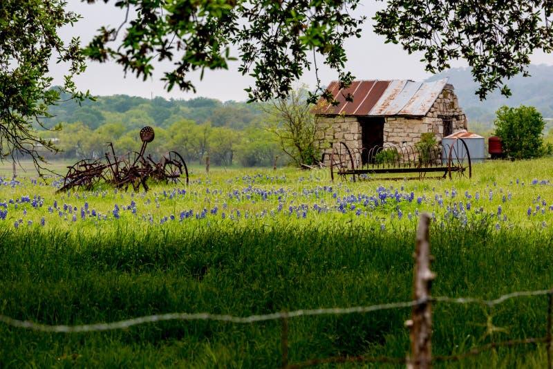 Casa velha de Abandonded em Texas Wildflowers fotos de stock