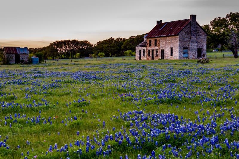 Casa velha de Abandonded em Texas Wildflowers foto de stock