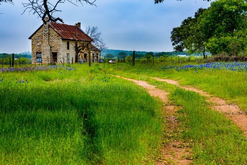 Casa velha de Abandonded em Texas Wildflowers fotografia de stock