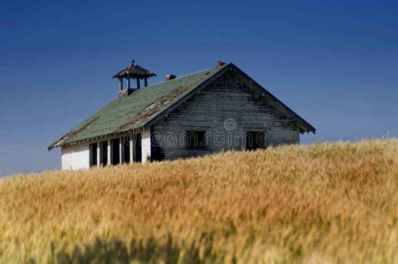 Casa velha no campo de trigo fotos de stock royalty free