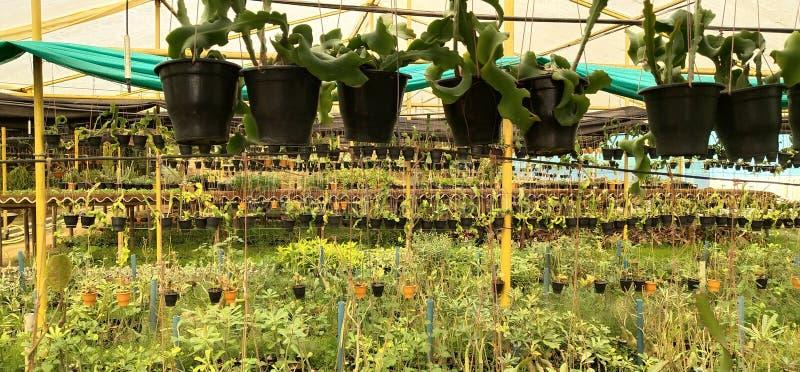 Casa verde de la agricultura de la planta fotos de archivo