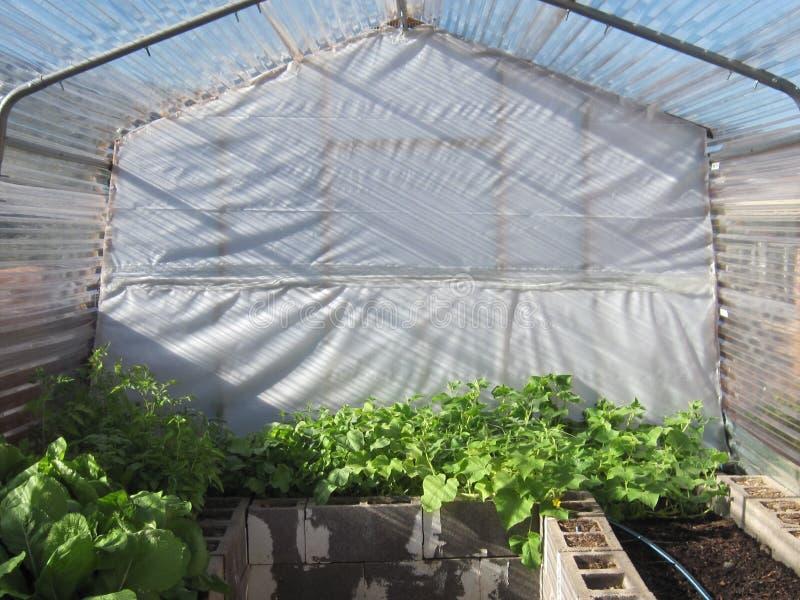 Casa verde orgânica fotos de stock