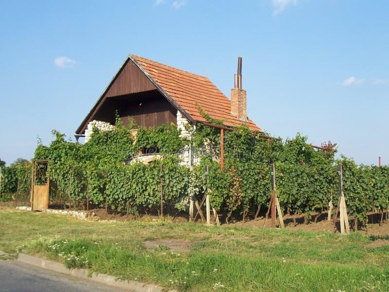 Casa vicino alla vigna