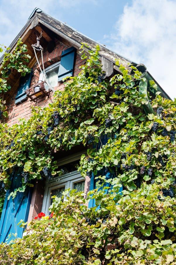 Casa vieja con las plantas del vino imágenes de archivo libres de regalías