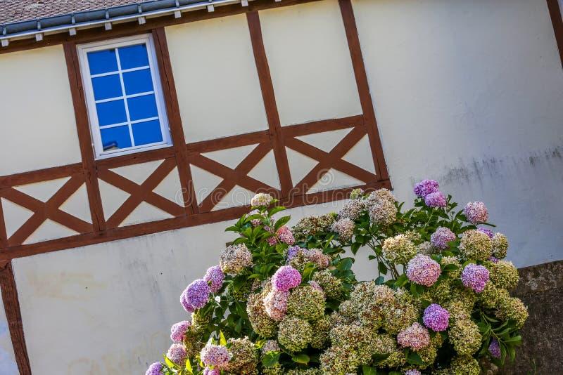 casa vieja de Bretaña con las ventanas y la planta de la hortensia en la vanguardia imagen de archivo libre de regalías