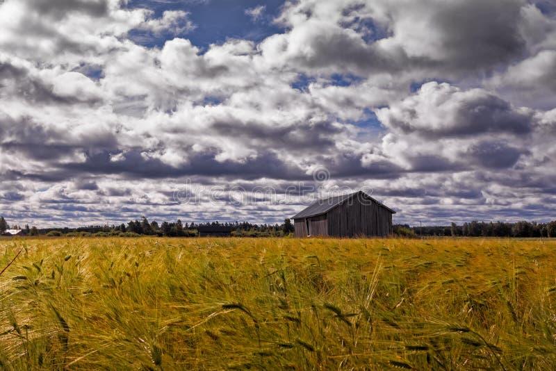 Casa vieja del granero en el campo de Rye foto de archivo libre de regalías
