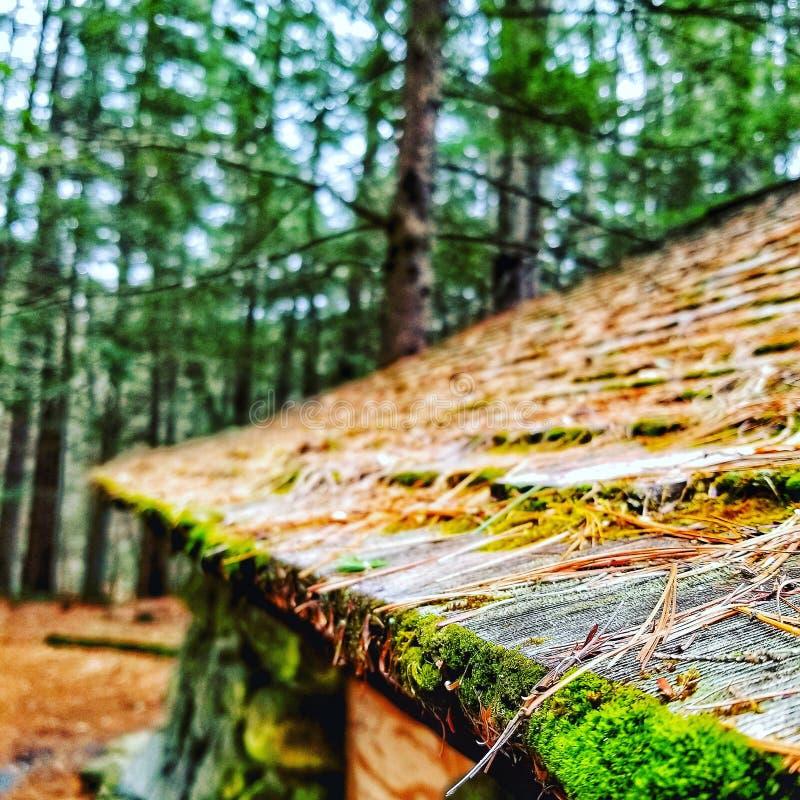 Casa vieja en las maderas fotografía de archivo libre de regalías