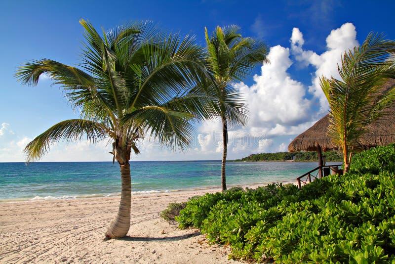 Casa y palmas de playa en el fondo azul del mar y del cielo foto de archivo libre de regalías