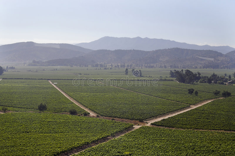 Casablanca Wine Valley Chile royalty free stock photos