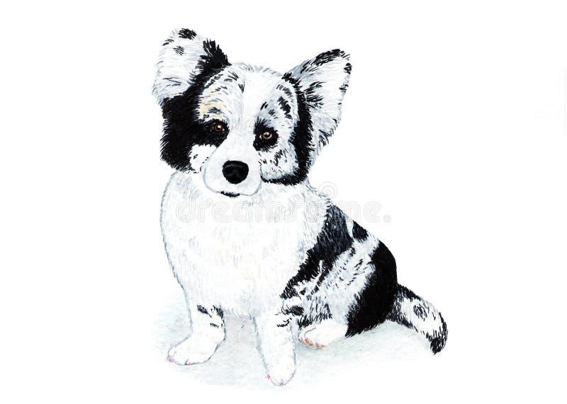 Casaco de lã do corgi de Galês, terrier Ilustração da aguarela fotos de stock