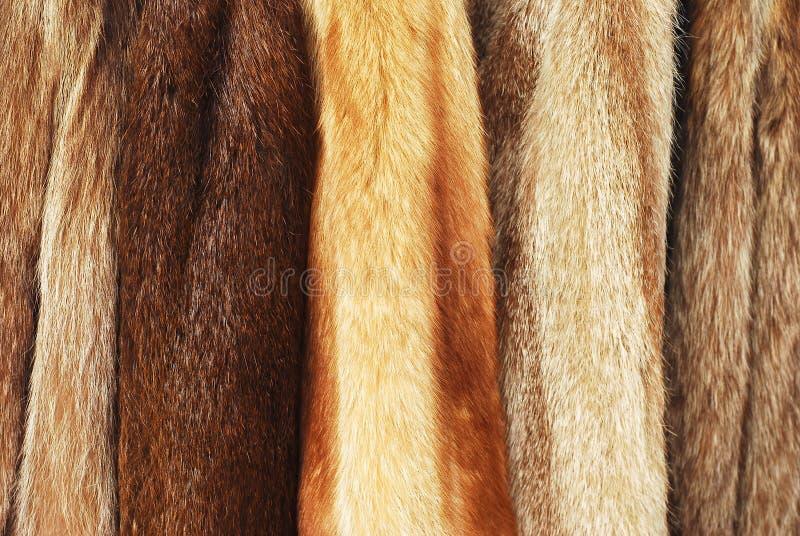 Casacos de pele foto de stock royalty free