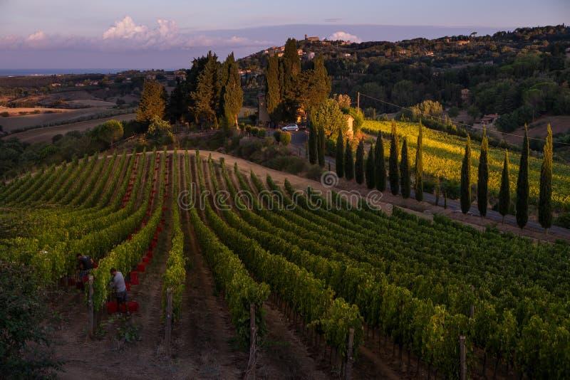 Casale Marittimo, Тоскана, Италия, взгляд от виноградника на SEPT. стоковое изображение