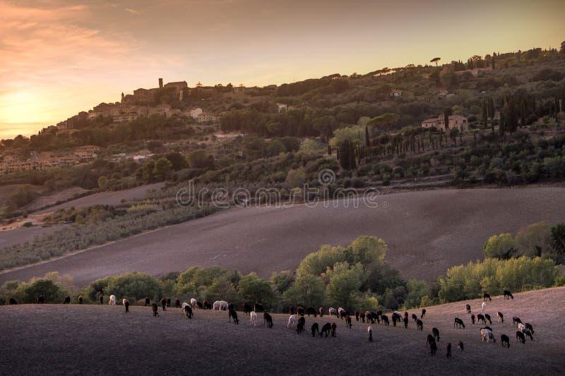 Casale Marittimo, Toscanië, Italië, mening door de gebieden met t royalty-vrije stock fotografie