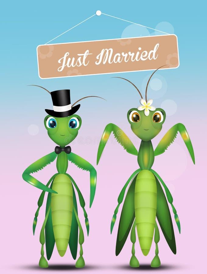 Casamento da louva-a-deus ilustração stock
