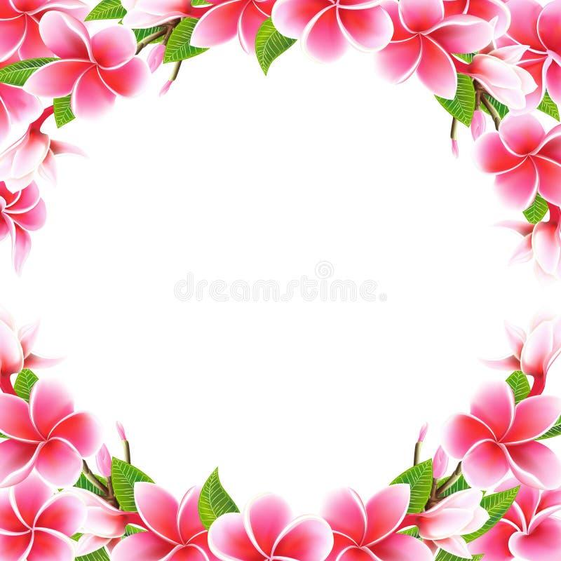 Casandose el marco y poner letras florales del plumeria de la tarjeta de la invitaci?n a la plantilla de la postal imágenes de archivo libres de regalías
