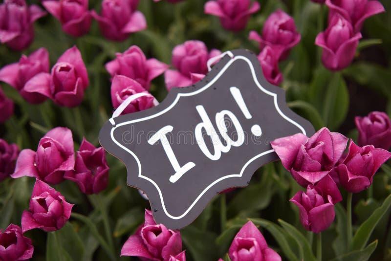 Casarse oferta con los tulipanes y los tulipanes rosados en campo holandés de la naturaleza imágenes de archivo libres de regalías