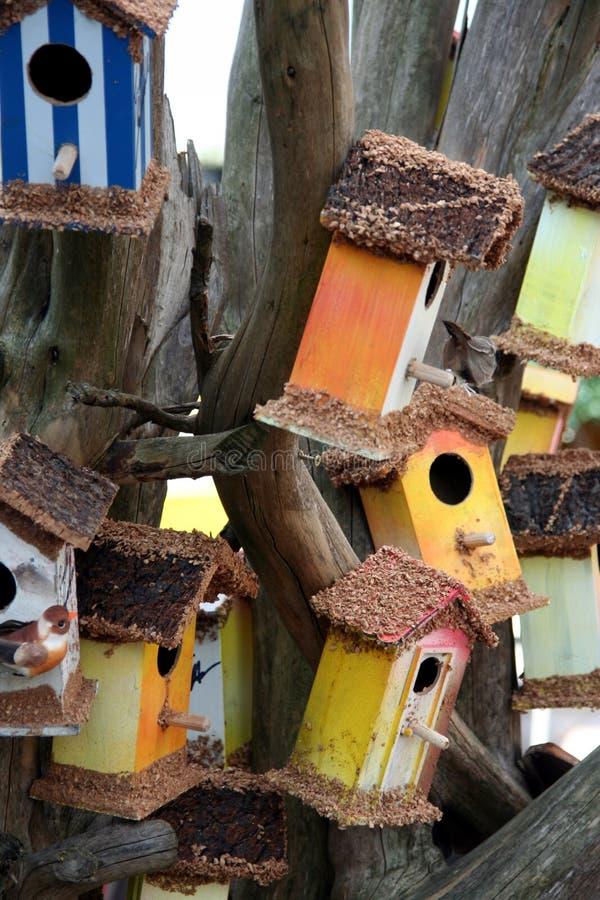 Casas coloreadas del pájaro fotografía de archivo libre de regalías