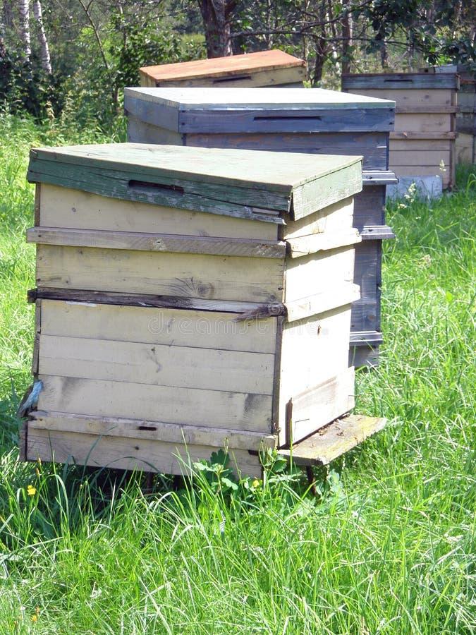 Casas de abelhas imagens de stock