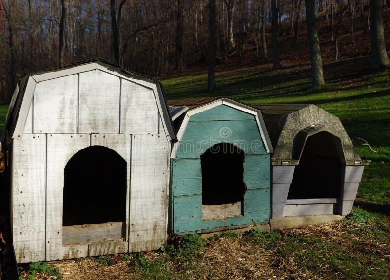 Casas de cão foto de stock royalty free