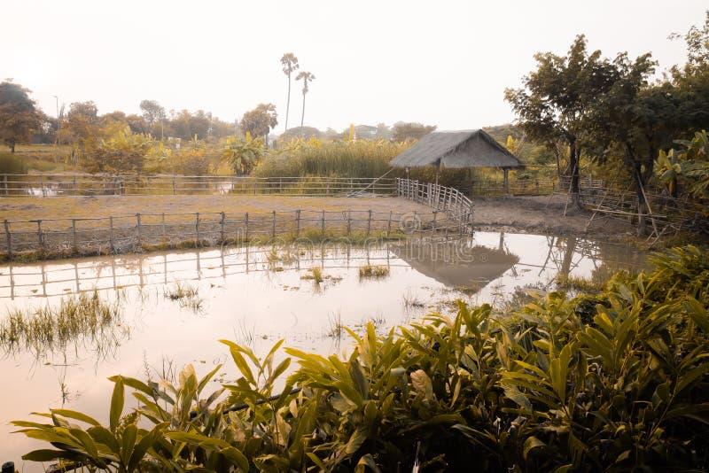 Casas de campo velhas do estilo de vida no campo asiático no céu dos campos verdes, no lago e em destinos claros do curso da natu imagem de stock