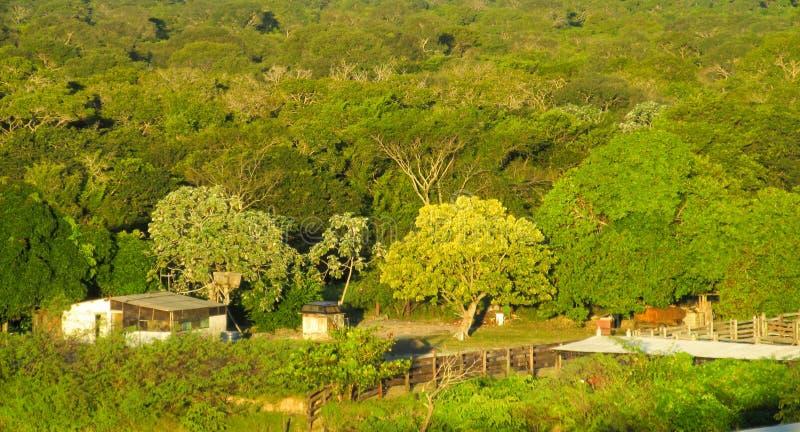 Casas de la granja entre árboles verdes fotografía de archivo
