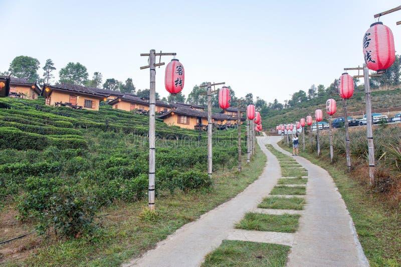 Casas de Lee Wine Lodging entre la plantación de té en la cuesta de la colina en el pueblo cariñoso tailandés tailandés de Rak de imágenes de archivo libres de regalías
