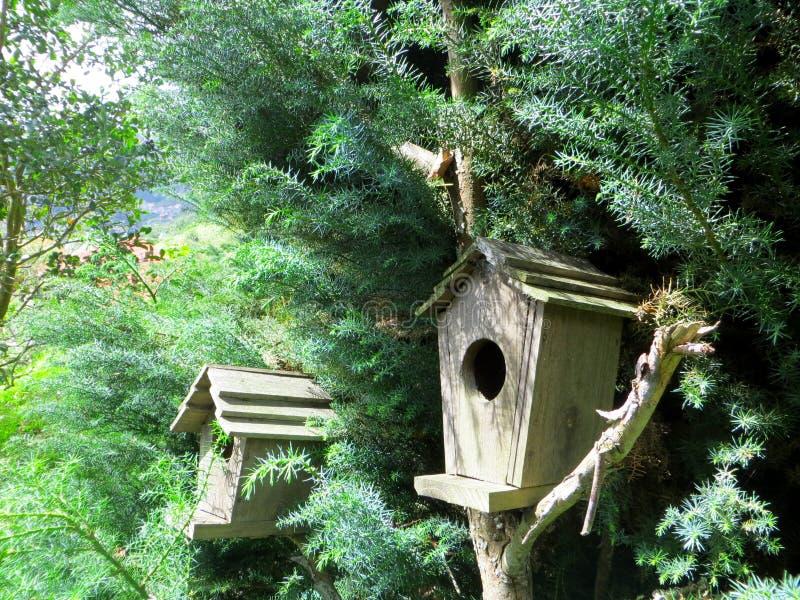 Casas de madeira do pássaro fotografia de stock royalty free