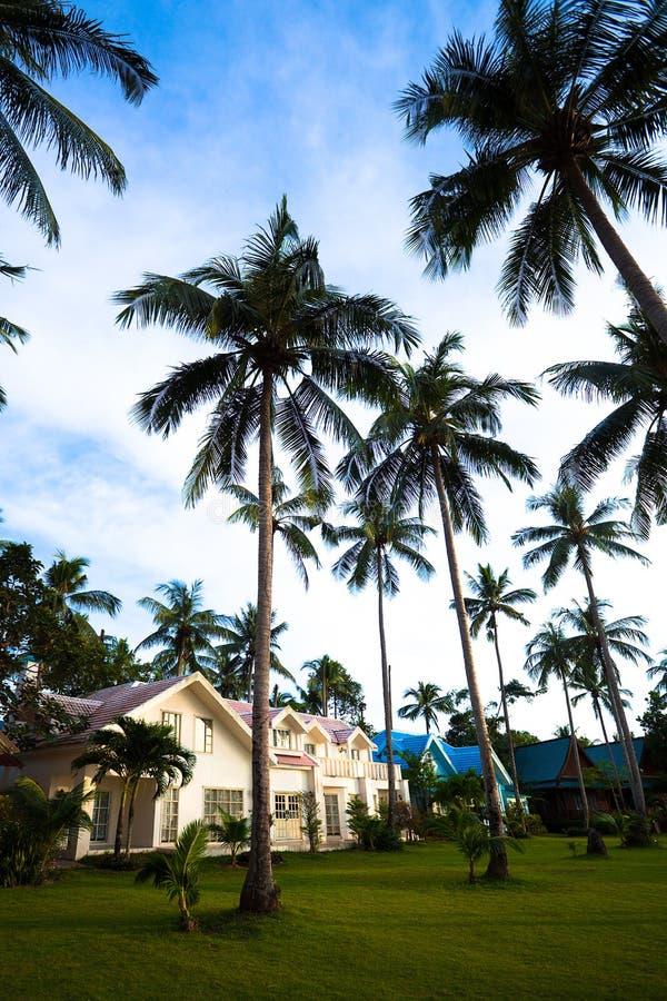 Casas de planta baja y palmas modernas foto de archivo libre de regalías
