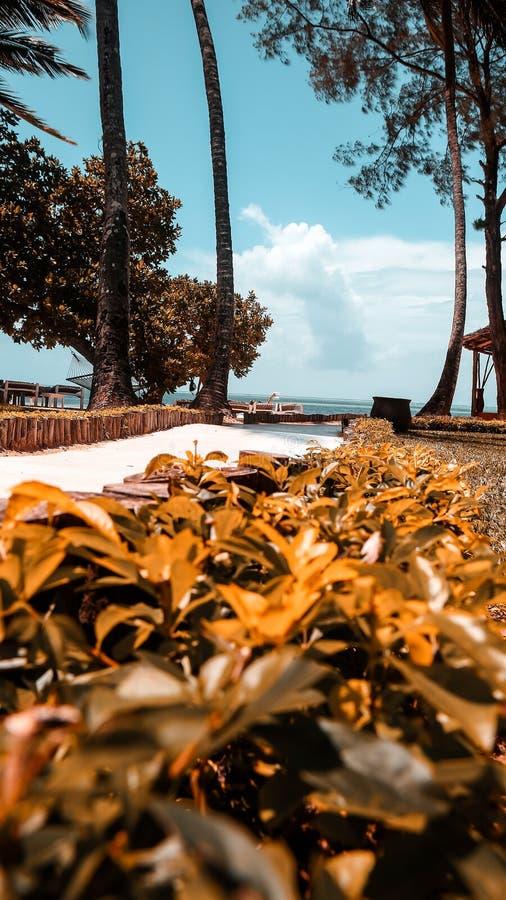 Casas do feriado com as palmeiras nos trópicos País morno para t imagens de stock royalty free