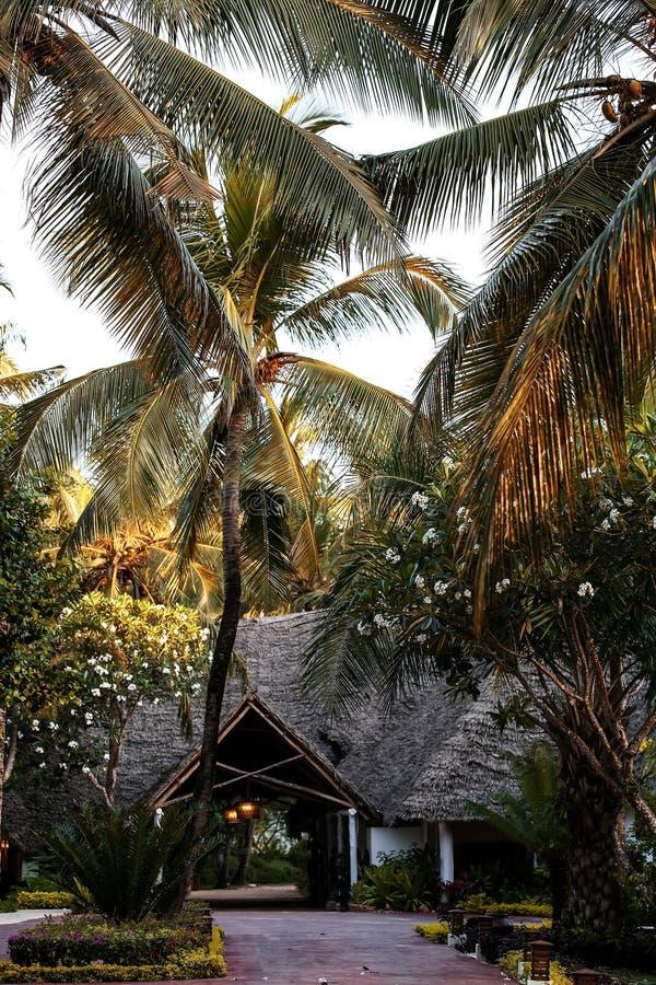Casas do feriado com as palmeiras nos trópicos País morno para t imagem de stock royalty free