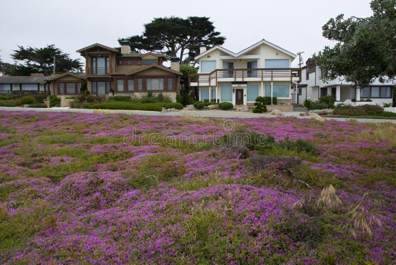 Casas pacíficas do bosque, Monterey - Califórnia fotos de stock royalty free