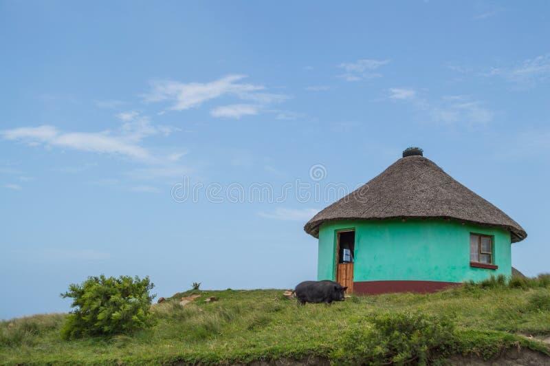 Casas redondas tradicionales en la bahía del café, Eastern Cape, Afri del sur fotos de archivo
