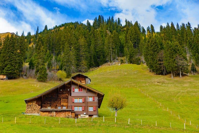 Casas suíças tradicionais do estilo nos montes verdes com a floresta na área dos cumes de Suíça, Europa fotografia de stock royalty free